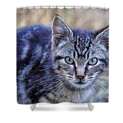Shower Curtain featuring the photograph Feral Kitten by Chriss Pagani