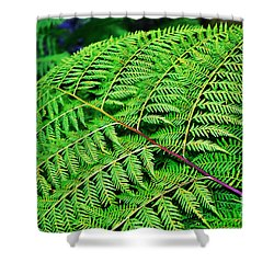 Fern Frond Shower Curtain by Kaye Menner