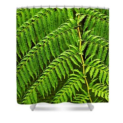 Fern Fronds Shower Curtain by Carlos Caetano