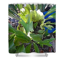 Fern With Blue Bucket Shower Curtain by Patricia Greer