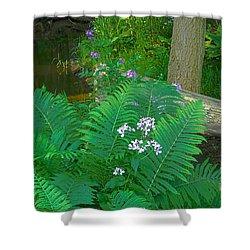 Ferns And Phlox Shower Curtain by Michael Peychich