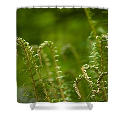 Ferns Fiddleheads Shower Curtain by Mike Reid