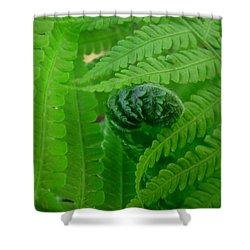 Ferns Fine Art Prints Green Forest Fern Shower Curtain by Baslee Troutman