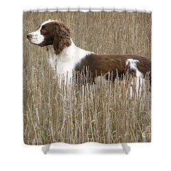Field Bred Springer Spaniel Shower Curtain
