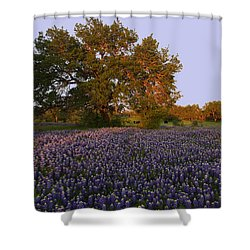 Field Of Blue Shower Curtain by Susan Rovira