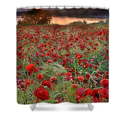 Field Of Poppies Shower Curtain by Guido Montanes Castillo