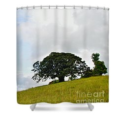 Fig Tree On A Hill Shower Curtain by Kaye Menner
