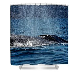 Shower Curtain featuring the photograph Fin Whale Spouting by Don Schwartz