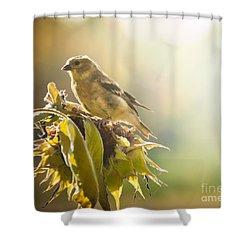Finch Aglow Shower Curtain by Cheryl Baxter