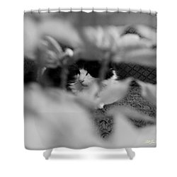 Shower Curtain featuring the photograph Find The Kitty by Jeanette C Landstrom