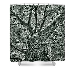Finkles Landing Tree Shower Curtain