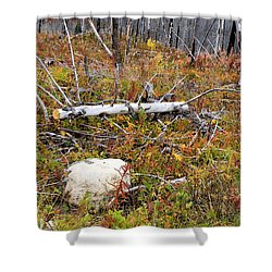 Fire And Fall Shower Curtain by Susan Kinney