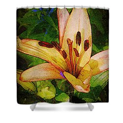 First Asiatic  Shower Curtain by Chris Berry