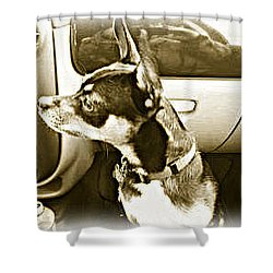 Shower Curtain featuring the photograph First Ride Home by Pamela Hyde Wilson