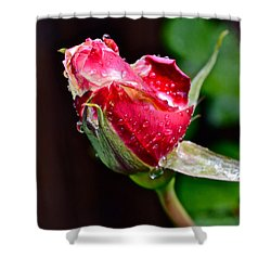 First Rose Shower Curtain by Bill Owen