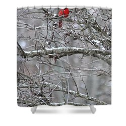 First Snow Fall Shower Curtain by Kume Bryant