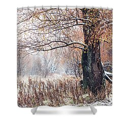 First Snow. Old Tree Shower Curtain by Jenny Rainbow