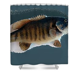 Fish Mount Set 10 B Shower Curtain by Thomas Woolworth