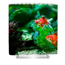 Shower Curtain featuring the photograph Fish Tank by Matt Malloy