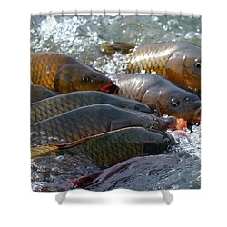 Shower Curtain featuring the photograph Fishing And Hunting by Elizabeth Winter