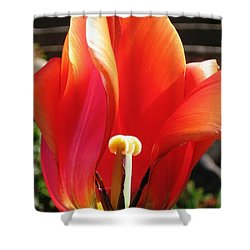 Shower Curtain featuring the photograph Flame by Rory Sagner