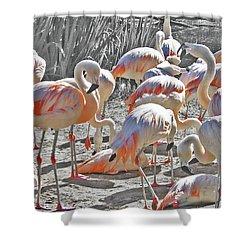 Shower Curtain featuring the photograph Flamingos  by Lizi Beard-Ward