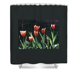 Flared Red Yellow Tulips Shower Curtain by Tom Wurl
