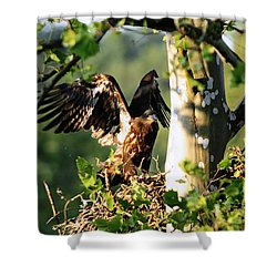 Shower Curtain featuring the photograph Fledgling Testing The Wind by Randall Branham