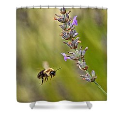 Flight Of The Bumble Shower Curtain by Karol Livote