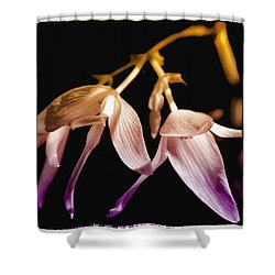 Floral Blend Shower Curtain by David Patterson
