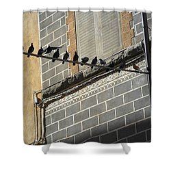 Shower Curtain featuring the photograph Florentine Pigeons by Laurel Best