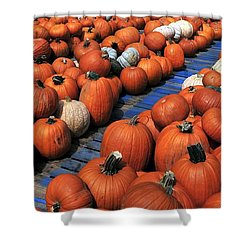 Florida Gator Pumpkins Shower Curtain by David Lee Thompson