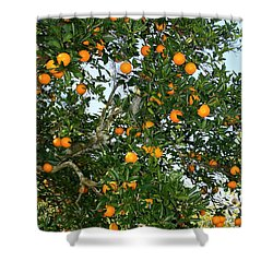 Florida Oranges Shower Curtain by Carol Groenen