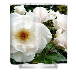 Flourishing Iceberg Roses Shower Curtain by Will Borden