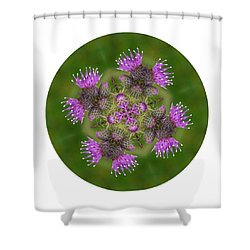 Shower Curtain featuring the photograph Flower Of Scotland by Lynn Bolt