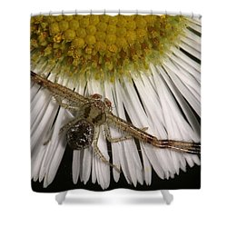 Flower Spider On Fleabane Shower Curtain