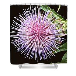 Flowering Artichoke Top View Shower Curtain by Byron Varvarigos
