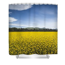 Flowering Mustard Crop In Canterbury Shower Curtain by Colin Monteath