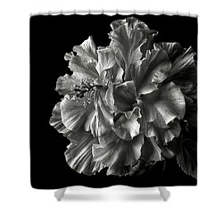 Fluffy Hibiscus In Black And White Shower Curtain