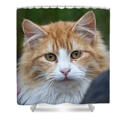 Shower Curtain featuring the photograph Fluffy Orange by Chriss Pagani