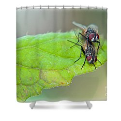 Fly Love Shower Curtain