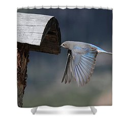 Flying Around Shower Curtain by Shane Bechler