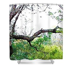 Shower Curtain featuring the photograph Flying Branch by Pamela Hyde Wilson