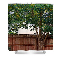 Shower Curtain featuring the photograph Fog In Olympia II by Jeanette C Landstrom