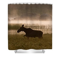 Foggy Stroll Shower Curtain by Brent L Ander