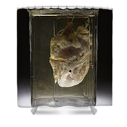Forensic Evidence, Heart Perforated Shower Curtain by Science Source