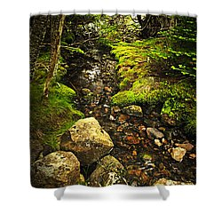 Forest Creek Shower Curtain by Elena Elisseeva