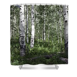 Forever Aspen Trees Shower Curtain by Madeline Ellis