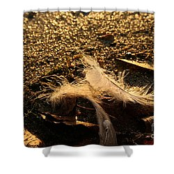 Found Feathers Shower Curtain by Susan Herber