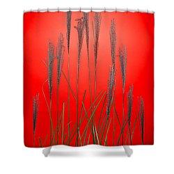 Fountain Grass In Red Shower Curtain by Steve Gadomski